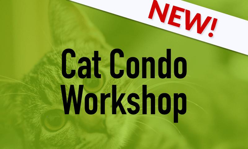 Cat Condo workshop blog image